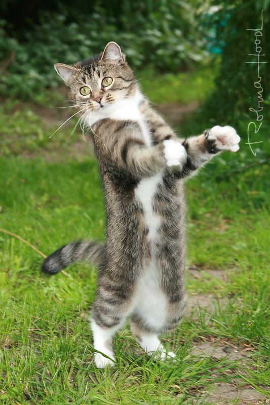 Meine Katze draußen im Garten in freier Natur. ;D