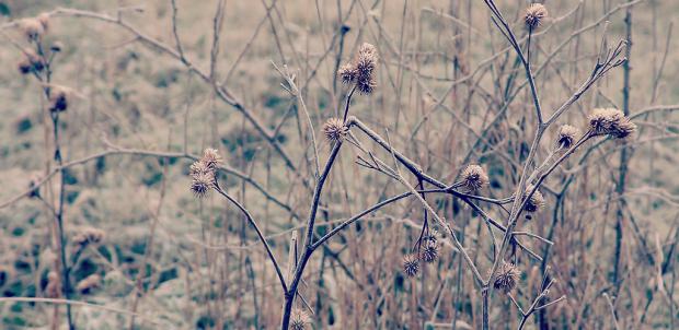 Robina Hood Naturfoto Diesteln im Frost