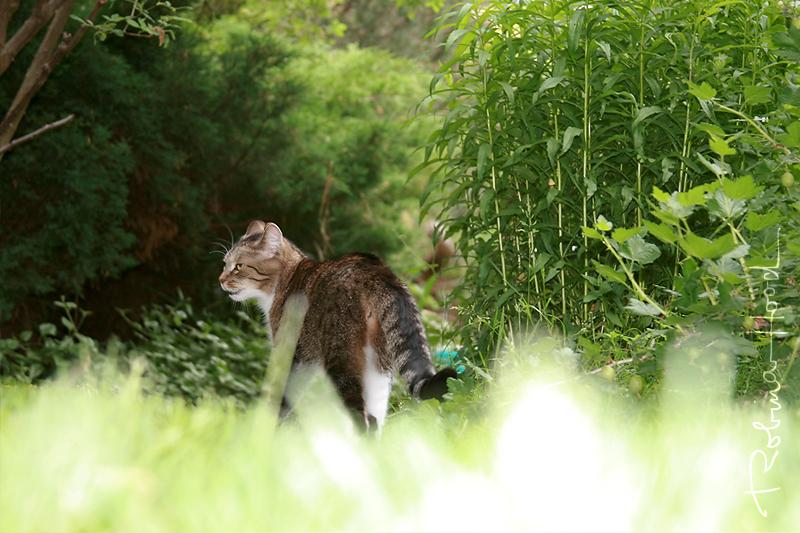 Die gemeine Hauskatze auf der Wiese. ; )